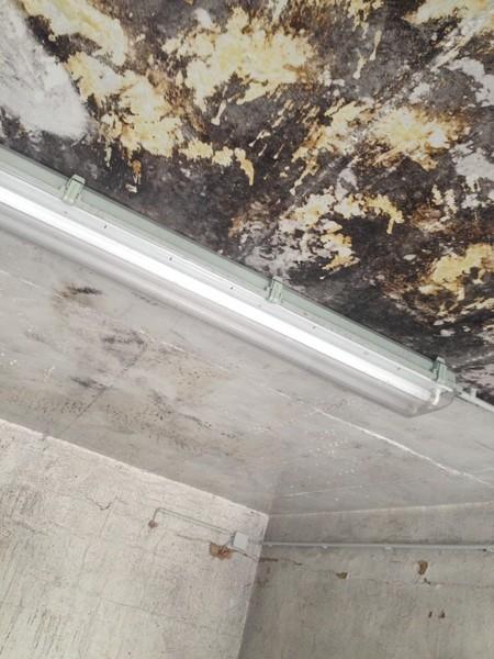 Wohnung Schimmel Entfernen schimmelsanierung in regensburg münchen nürnberg schimmel
